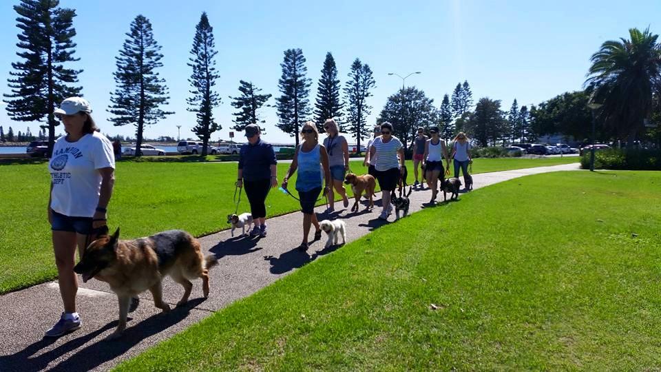 Reactive Dog Training Newcastle